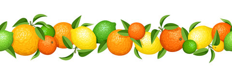 Horizontal seamless garland with citrus fruits. Vector illustration. Royalty Free Stock Photos