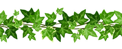 Horizontal seamless garland with ivy leaves. Vector illustration. Stock Photos