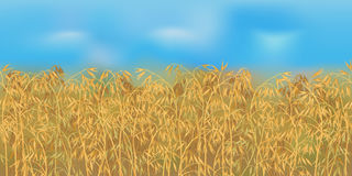Horizontal seamless oats field with the blue sky. Realistic vector oats field in the harvesting time Royalty Free Stock Photos