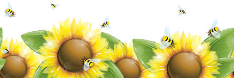 Horizontal seamless pattern - Beautiful sunflowers, green leaves and flying bees  on white Royalty Free Stock Photography