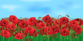 Horizontal seamless poppy field with the blue sky. Realistic vector poppy field in the harvesting time Stock Image