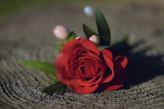 Delicate red rose small bouquet for buttonhole Royalty Free Stock Images