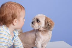 Free Horizontal Shot Of Adorable Baby Boy With Puppy, Sitting And Looking At Small Animal, Posing Isolated Over Blue Background, Infant Royalty Free Stock Photography - 171034377