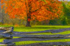 Autumn Leaves and Old Wooden Fence Royalty Free Stock Image
