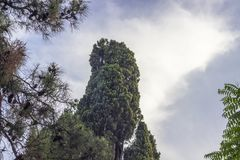 Horizontal shot of wide open blue sky with green big tree of pine tree at Izmir in Turkey. For lovelyday stock photography
