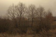 Horizontal sombre d'automne image libre de droits