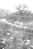 Horizontal sombre de l'hiver Photos stock