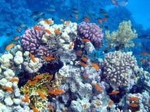 Horizontal sous-marin Photo stock