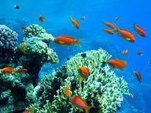 Horizontal sous-marin Photographie stock
