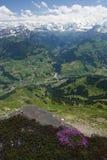 Horizontal suisse, fleur alpestre Photos libres de droits