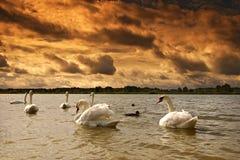 Horizontal sur le lac images stock