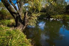 Horizontal tôt d'automne Rivière sauvage coulant le long des banques, en masse envahies avec des buissons et des arbres Image libre de droits
