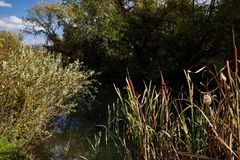 Horizontal tôt d'automne Rivière sauvage coulant le long des banques, en masse envahies avec des buissons et des arbres Images stock