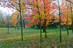 Horizontal tôt de verger d'automne Image stock