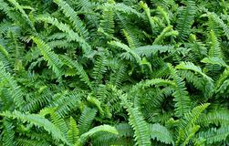 The Horizontal of Tassle Ferns Textured Background Stock Image