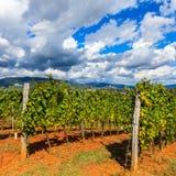 Horizontal, Toscane Val d'Orcia Images libres de droits