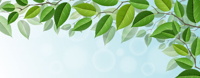 Horizontal tree branch banner with green leaves, for nature design. Horizontal tree branch banner with realistic green leaves, and blue sky in background. Vector vector illustration