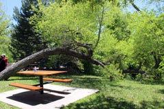 Horizontal Tree. A tree grows horizontally across the river Royalty Free Stock Photography