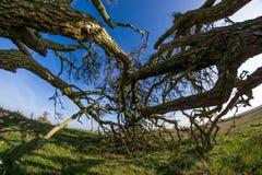 Horizontal trees Stock Image