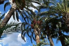 Horizontal tropical photographie stock