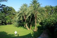 Horizontal tropical Photos libres de droits