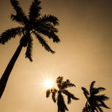 Horizontal tropical Image stock
