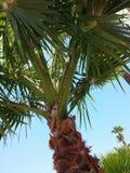 Horizontal tropical Photo stock