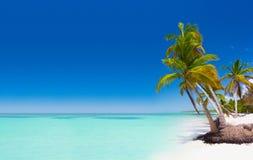 Horizontal tropical Image libre de droits