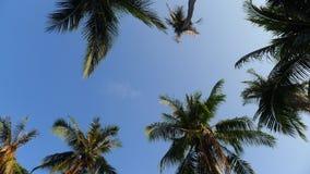 Horizontal tropical Image stock