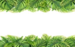 Border of tropical leaves. Horizontal tropical border with leaves of monstera, fern and palm tree. Design element for card, advertisement of vacation or Stock Image