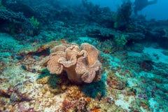 Horizontal tropical coloré de récif photographie stock libre de droits
