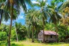 Horizontal tropical rural Hutte en bambou entourée par la forêt de paume Photos stock