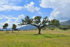 Horizontal type avec l'arbre chez Estrémadure (Espagne) Image stock