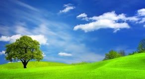 Horizontal vert photographie stock libre de droits