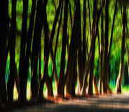 Horizontal vibrant crystal tree alley with light leak Royalty Free Stock Image