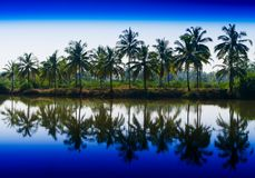 Horizontal vibrant dramatic palms in a row with reflections land. Scape backgorund backdrop vivid bright color rich blue lake river water oasis india goa tree royalty free stock photography