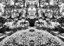 Horizontal vibrant vivid black and white stones spiritual balance Stock Photo