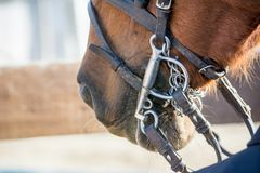Close Up Of Horse Bridles royalty free stock photography