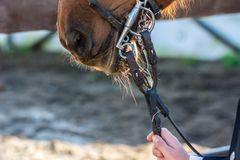 Close Up Of Horse Bridles stock images