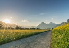 Gravel road parting a rapeseed canola field and a yellow wildflower meadow with the setting sun disappearing behind a beautiful mo. A horizontal view of a gravel Royalty Free Stock Images