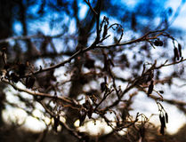 Horizontal vivid autumn tree branches bokeh Stock Photos