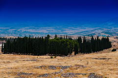 Horizontal vivid cypress accumulation landscape Stock Images