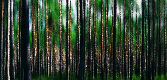 Horizontal vivid forest wood abstraction background Stock Images
