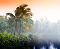 Horizontal vivid indian sunset palm on lake beach background bac. Kdrop nobody blank empty space sparse vibrant bright color rich orange red palms trees jungle royalty free stock photography