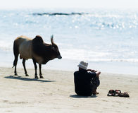 Horizontal vivid man and cow on Indian ocean  beach Stock Image