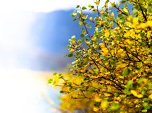 Horizontal vivid right aligned yellow bush bokeh background back. Drop vibrant bright color composition design concept element object shape decoration scene royalty free stock photography