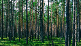 Horizontal vivid symmetric forest wood composition background  Stock Photography