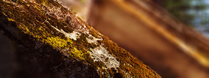 Horizontal vivid warm light moss on bunker landscape perspective Royalty Free Stock Photos