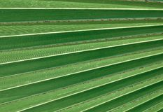 Horizontal von grünes Palmblatt-strukturiertem Hintergrund Lizenzfreie Stockbilder