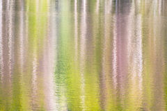Horizontal wallpaper on forest reflected in a lake Stock Images